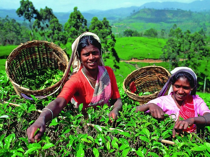 Цейлонський чай Шрі-Ланки