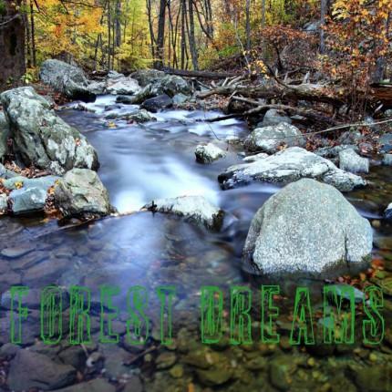 Музыкальный альбом Ziggy B. Freeman «Forest Dreams»