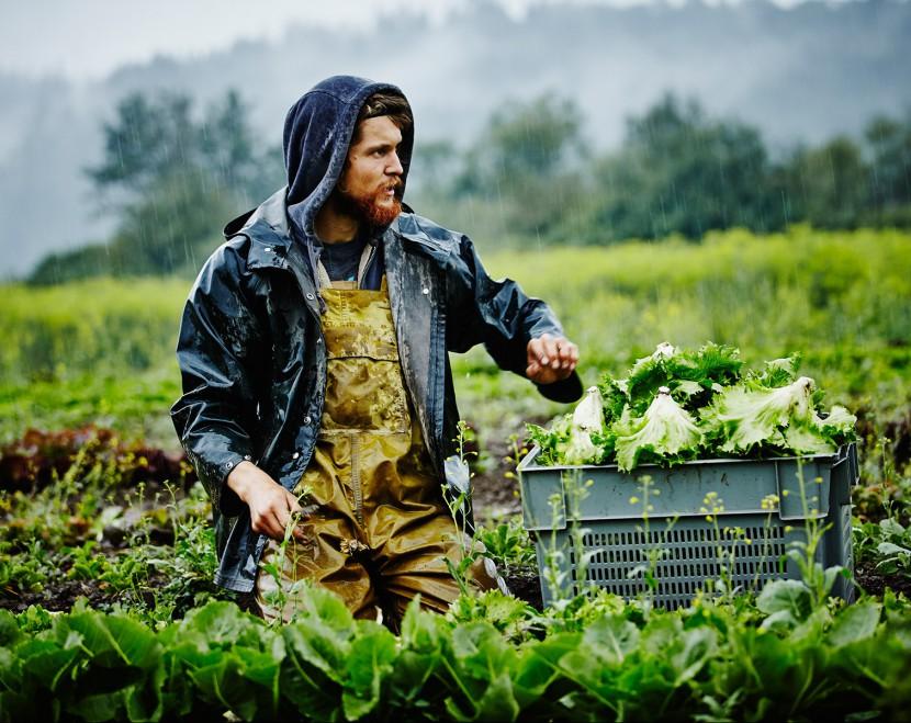 20 производителей органических продуктов в Украине