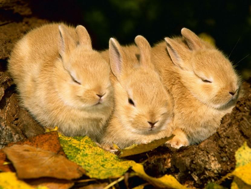 «Зайцы» мироздания  (притча)