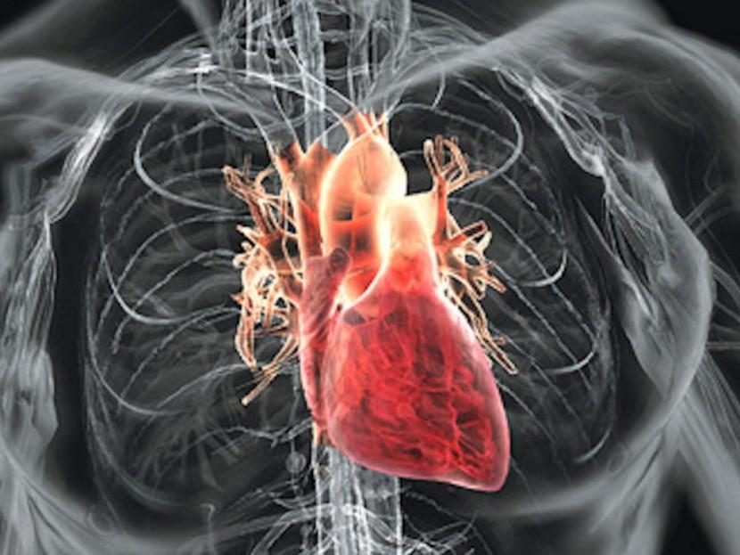 Про сердце и какое к нему имеют отношение проблемы с пищеварением