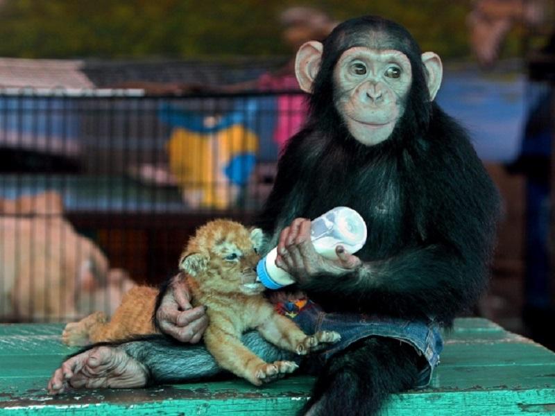 30 лучших фотографий животных, которые вы просто обязаны увидеть