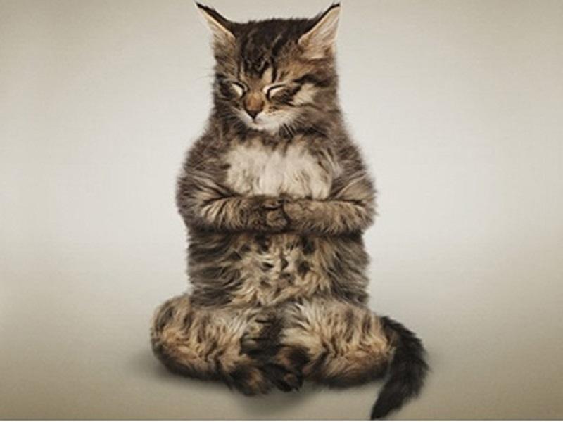Забавная йога для кошек и собак