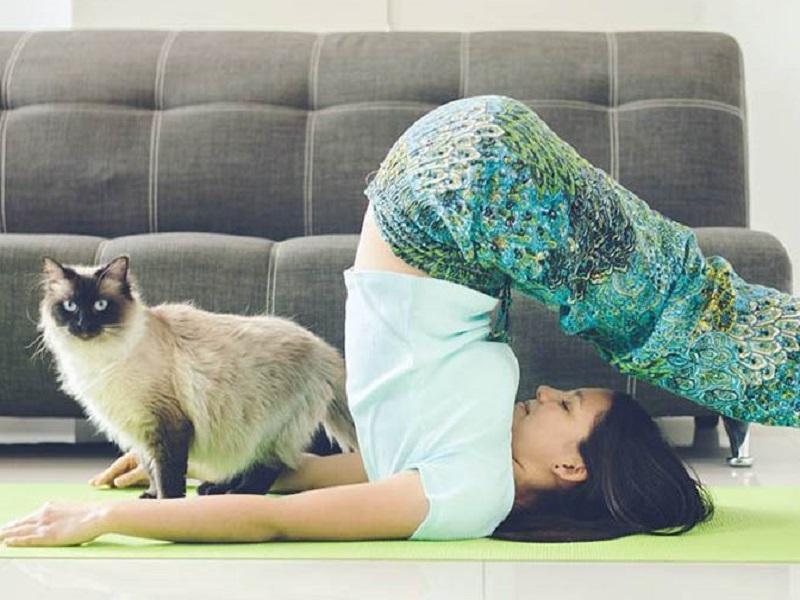 Пёсики и котики против йоги