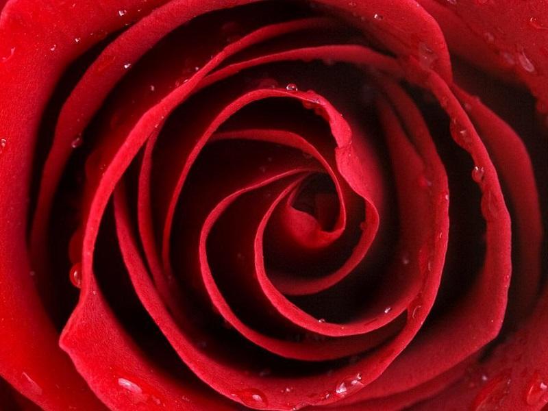 Цветомедитация: лечимся красным цветом