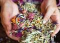 7 лучших трав для женского здоровья
