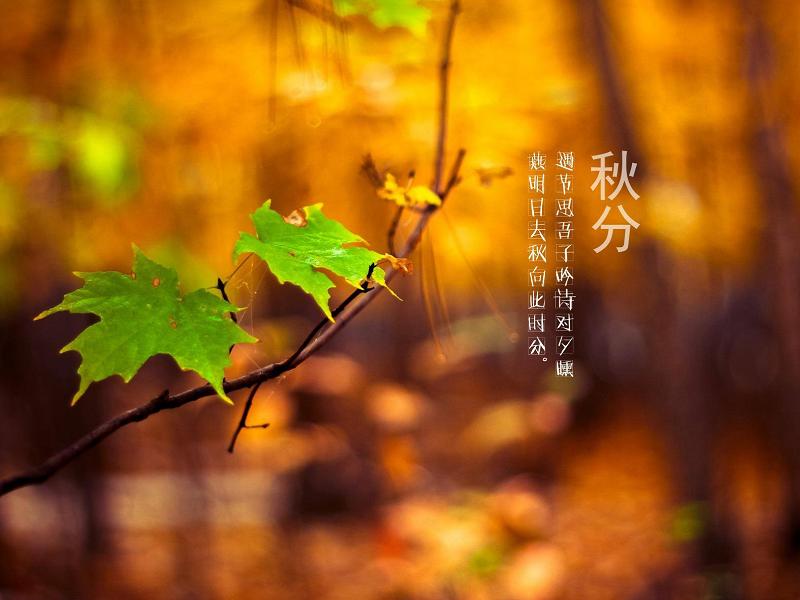 Образ жизни и поведение осенью в китайской традиционной медицине