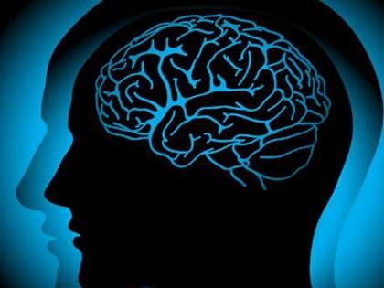 Эволюция мозга человека