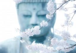 Безусловное принятие - высвобождает свет и гармонизирует чакры