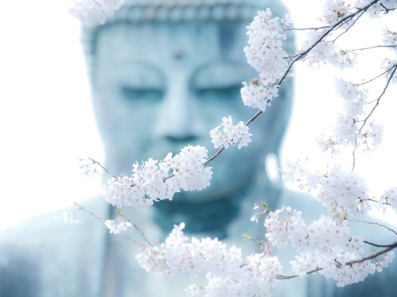 Безусловное принятие — высвобождает свет и гармонизирует чакры