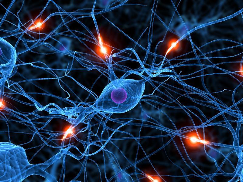 Дубынин Вячеслав — Мозг: общие принципы. Центры потребностей