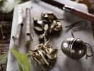 Кора осины — природный заменитель аспирина, а также лекарство от многих хворей