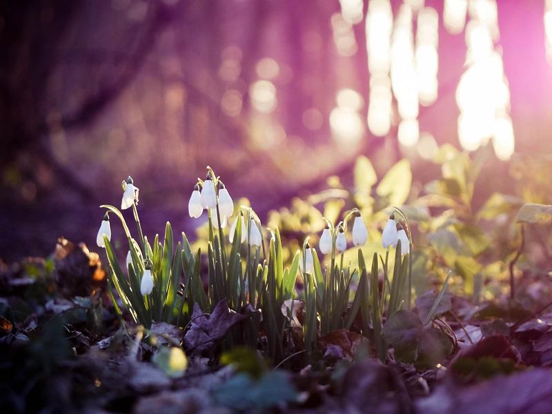 Аюрведические рекомендации на весенний период