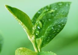 Трава, которая мгновенно избавит от привычки курения, ожирения, диабета и гипертонии