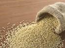 Пророщенные семена амаранта — мощный иммуномодулятор