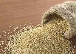 Пророщенные семена амаранта - мощный иммуномодулятор