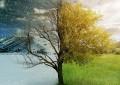 Андрей Головинов: сезоны и доши
