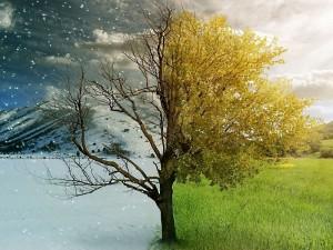 сезоны и доши