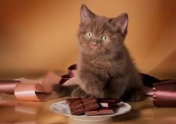 Шоколад, аюрведа, депрессия, и непонимание себя - в чем связь
