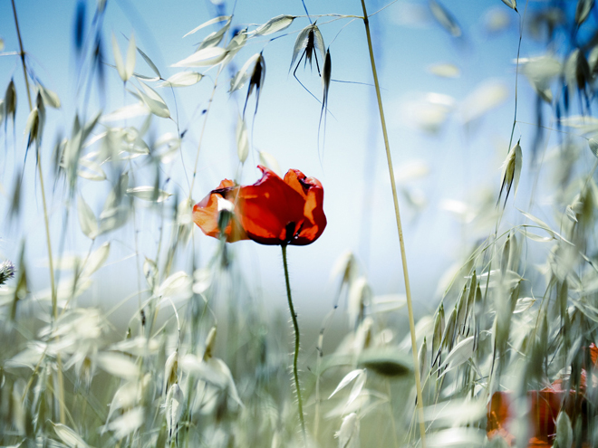 10 Аюрведических советов по предотвращению сезонной аллергии