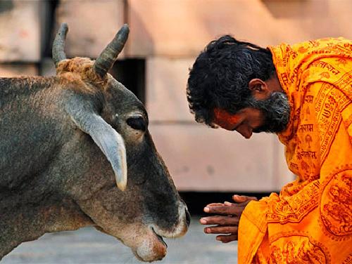 «Сарва-бхута-хита» – стремление делать добро всем существам