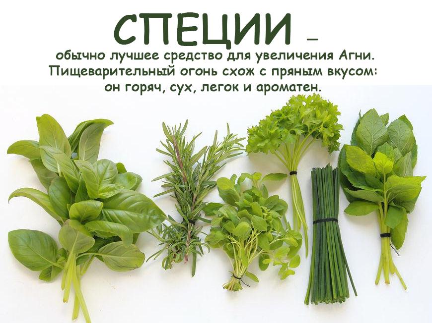 Травы, влияющие на пищеварительный огонь(1)