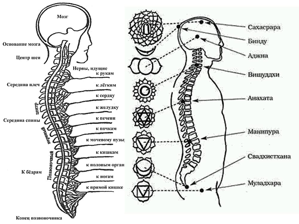 1-Асаны йоги на 7 чакр