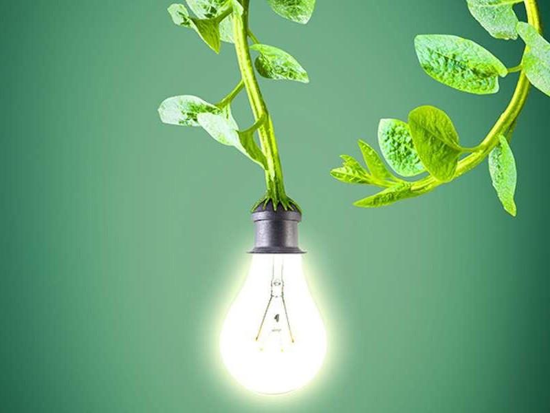 Прабхава — особая сила воздействия растений