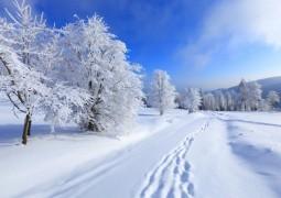 Подготовка организма к зиме с точки зрения Аюрведы